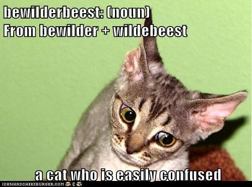 bewilderbeest: (noun)                              From bewilder + wildebeest   a cat who is easily confused