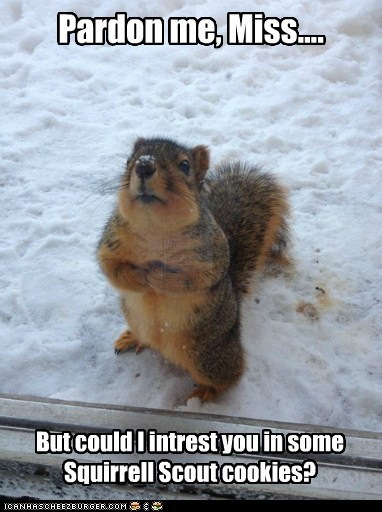 pardon me,girl scout cookies,squirrels,door to door,selling