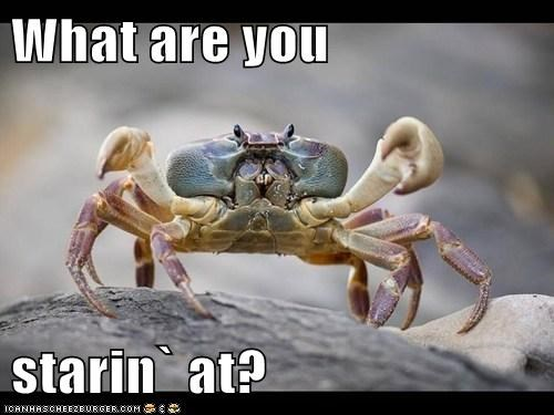 What are you  starin` at?