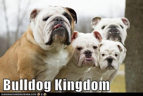 Bulldog Kingdom