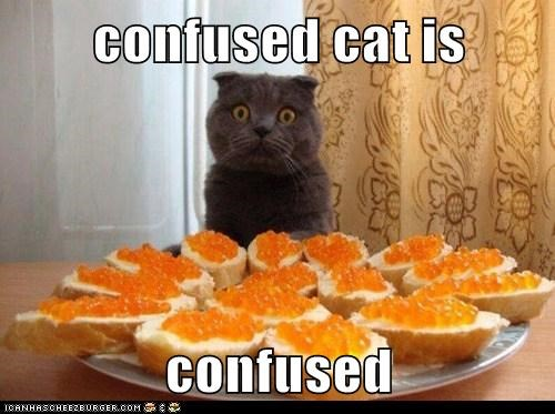 confused cat is   confused
