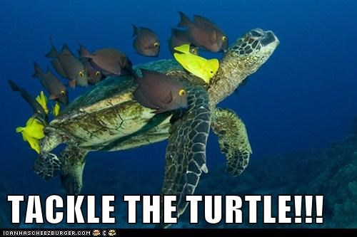 TACKLE THE TURTLE!!!