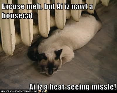Excuse meh, but Ai iz nawt a housecat  Ai iz a heat-seeing missle!
