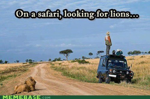 Jesus Christ It's a Lion, Get in the Car!