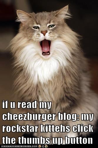 if u read my cheezburger blog: my rockstar kittehs click the thumbs up button