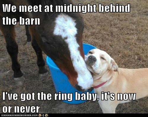 We meet at midnight behind the barn  I've got the ring baby, it's now or never