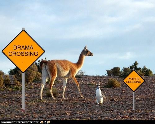 llama,drama,signs,pathos,crossing,penguin