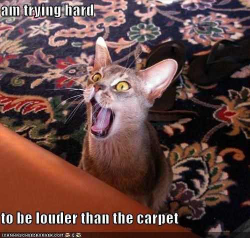 am trying hard  to be louder than the carpet