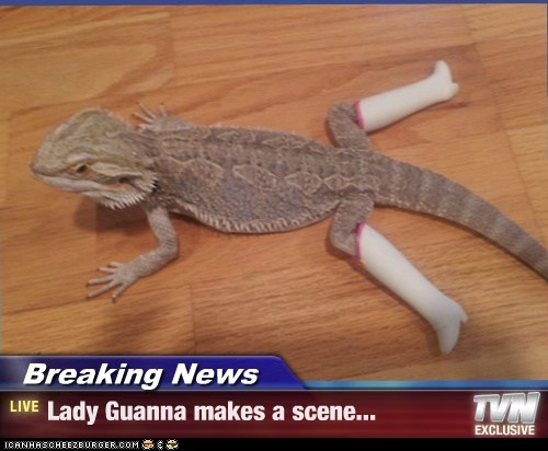 Breaking News - Lady Guanna makes a scene...