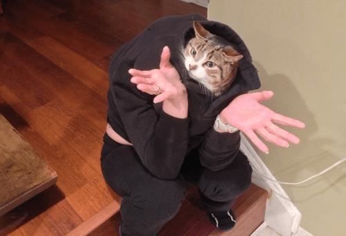 cat,head