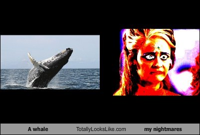 A whale Totally Looks Like my nightmares