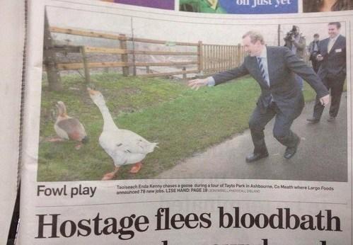 poultry,fowl,run,bloodbath