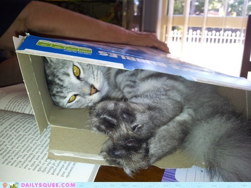 Reader Squee: Any Box