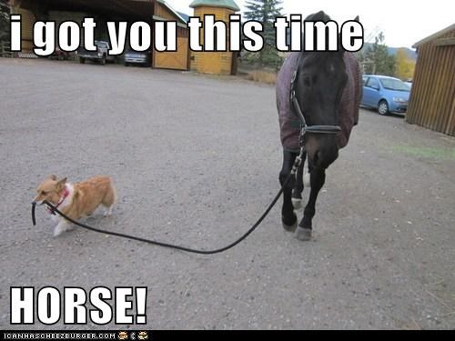 i got you this time  HORSE!