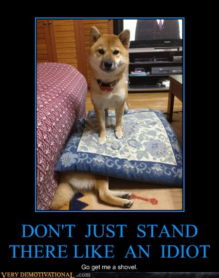 dogs,idiots,shovel