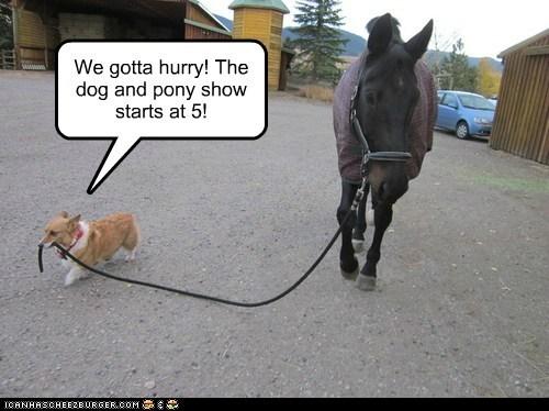 dogs,corgi,Dog and Horsey Show,horses,hurry
