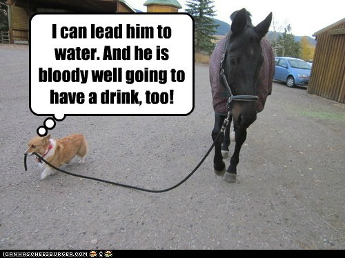 I can lead him to water. And he is bloody well going to have a drink, too!