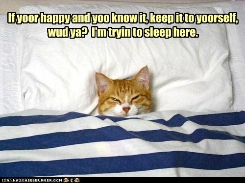 cat,bed,nap,rest,sleep,funny