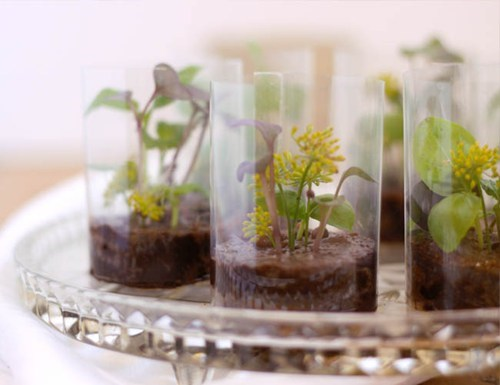 brownie,terrarium,herbs,edible,flowers