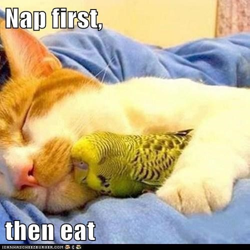 Nap first,   then eat