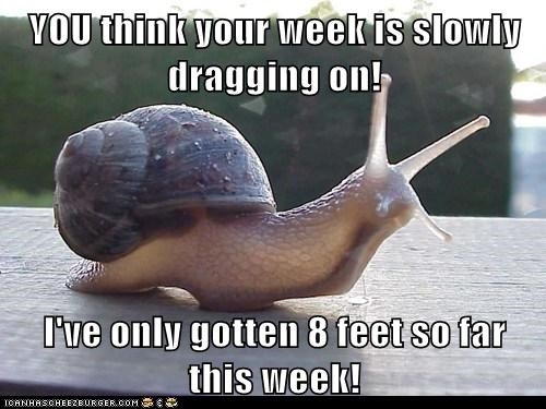 YOU think your week is slowly dragging on!  I've only gotten 8 feet so far this week!