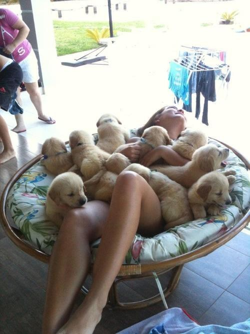 chair,paradise,dogs,woman,puppy,pile,girl