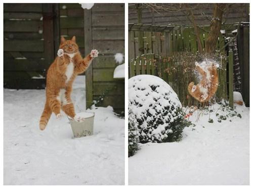 headshot,catch,FAIL,snowball,snow,winter,Cats