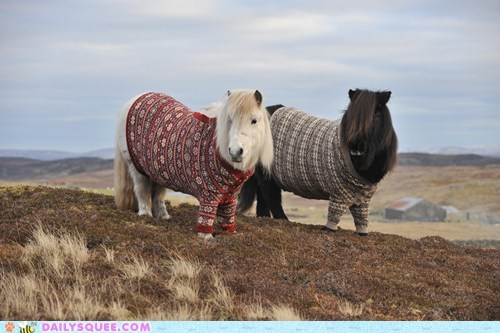 Squee Sweaters