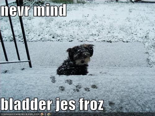 nevr mind  bladder jes froz