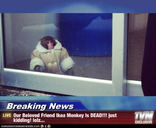 Breaking News - Our Beloved Friend Ikea Monkey Is DEAD!!! just kidding! lolz...