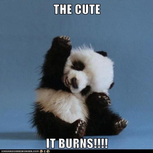 THE CUTE   IT BURNS!!!!
