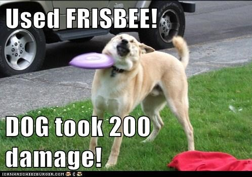 Used FRISBEE!  DOG took 200 damage!
