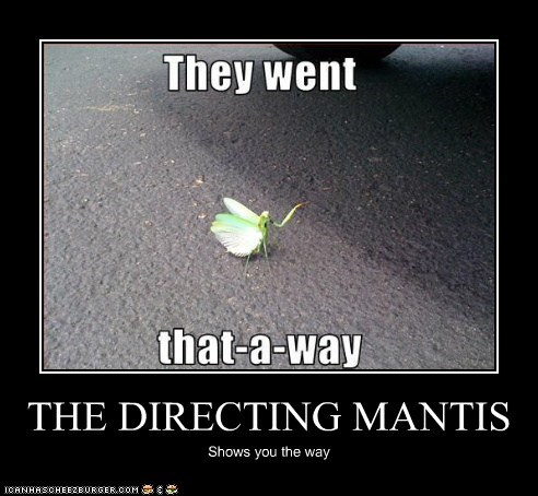 THE DIRECTING MANTIS