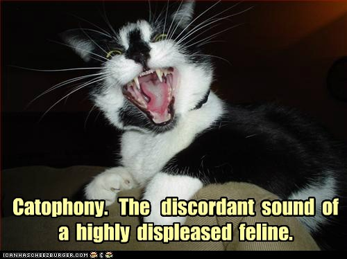 Catophony.   The   discordant  sound  of  a  highly  displeased  feline.