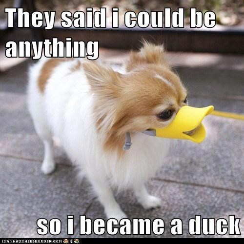 They said i could be anything  so i became a duck