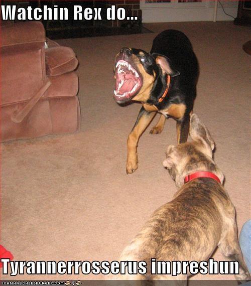 Watchin Rex do...  Tyrannerrosserus impreshun