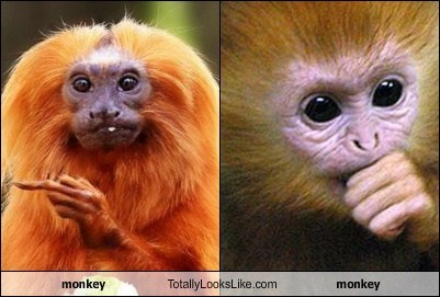 monkey Totally Looks Like monkey