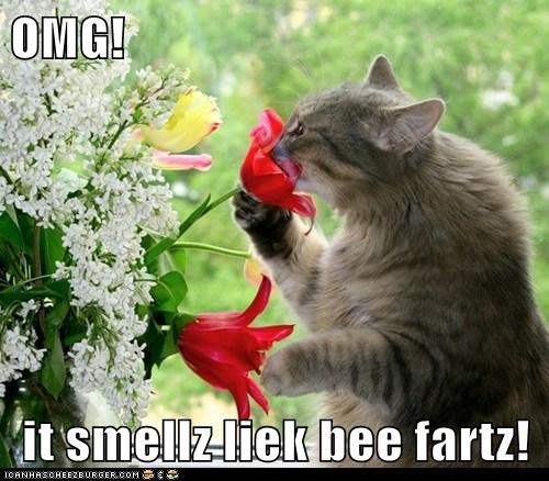 cat,smell,flowers,bee,funny