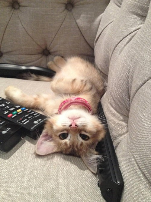 Cyoot Kitteh of teh Day: Couch Potato