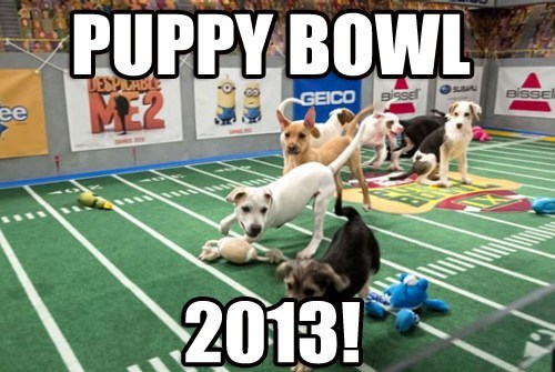 Starting Lineups Announced for Puppy Bowl 2013!