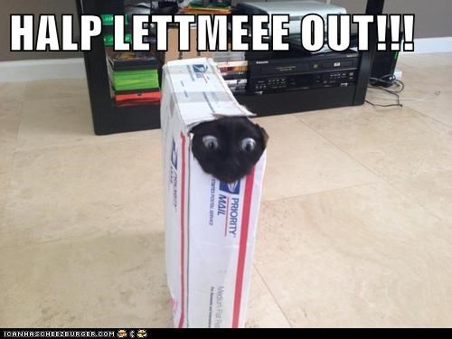HALP LETTMEEE OUT!!!