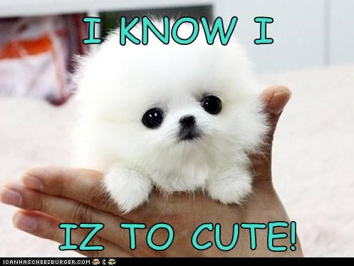 I KNOW I  IZ TO CUTE!