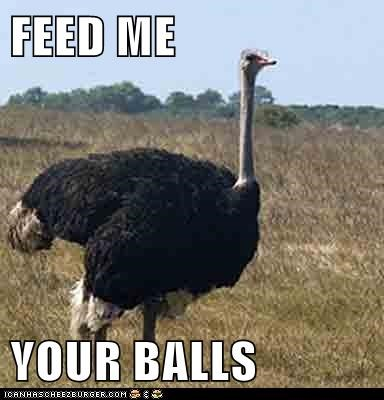 FEED ME  YOUR BALLS