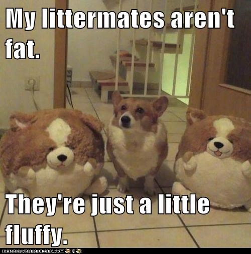 My littermates aren't fat.  They're just a little fluffy.