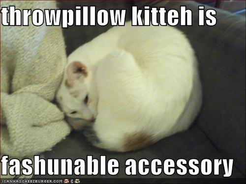 throwpillow kitteh is  fashunable accessory