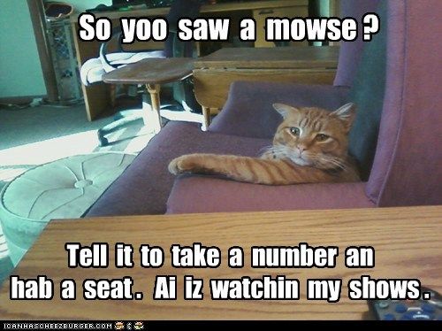 So  yoo  saw  a  mowse ?