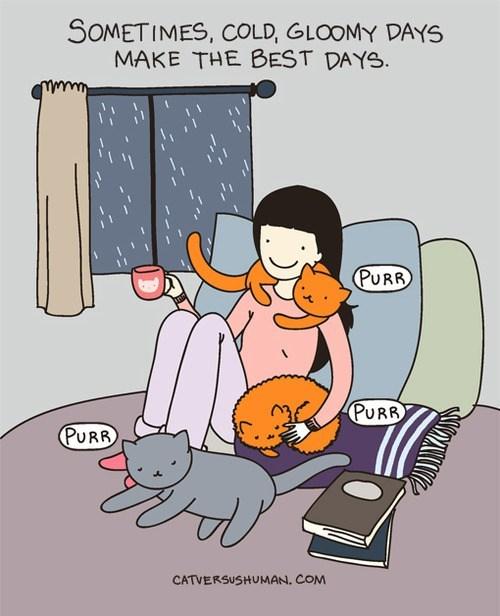 rainy day,cozy,cat versus human,friends,comfy,comic,Cats,rain