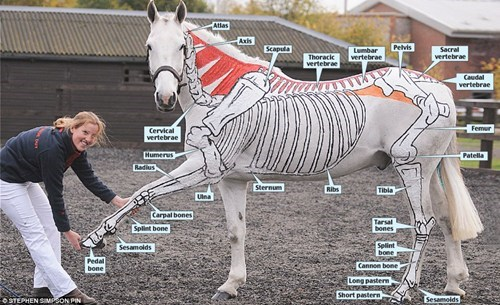 educational,diagram,painting,horse,g rated,win