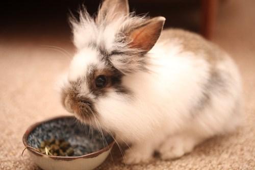 Bunday: Einstein Bunny