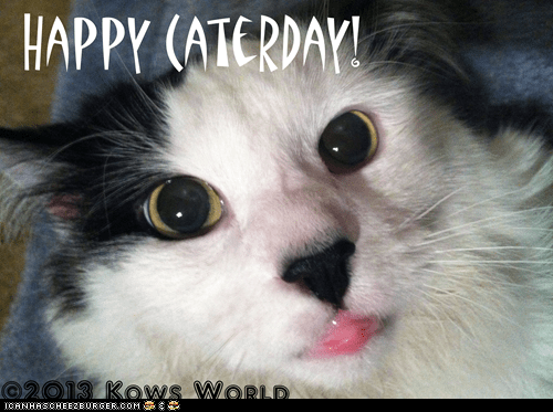 Happy Caterday!